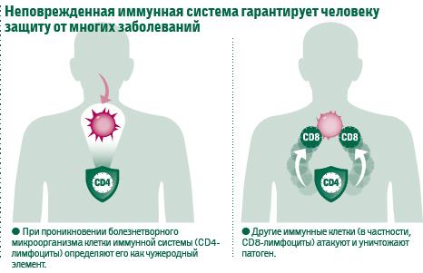 иммунная система борется с чужеродными клетками