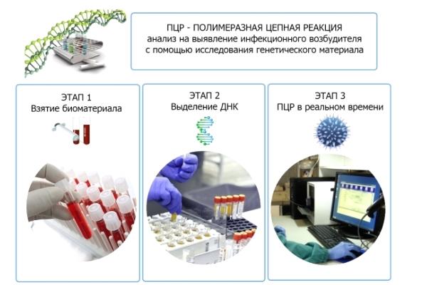 Лекарства против папиллом 6